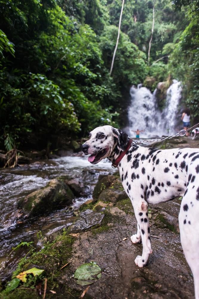 cachorro em cima da pedra com cachoeira ao fundo