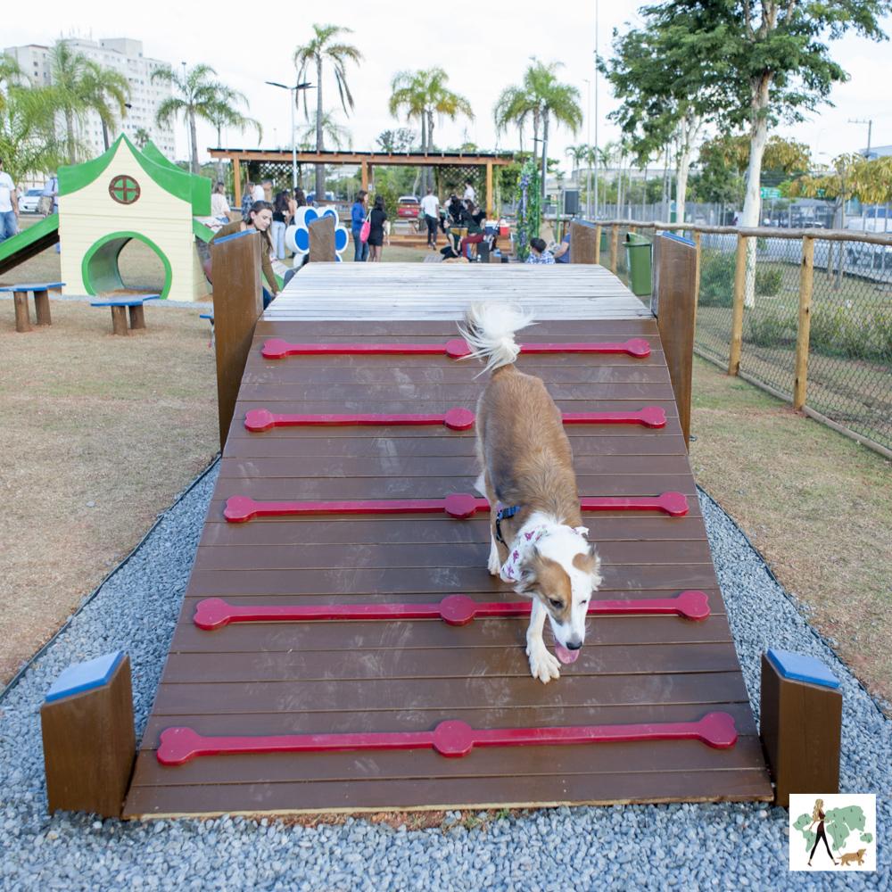 cachorro descendo rampa em parque para cachorro