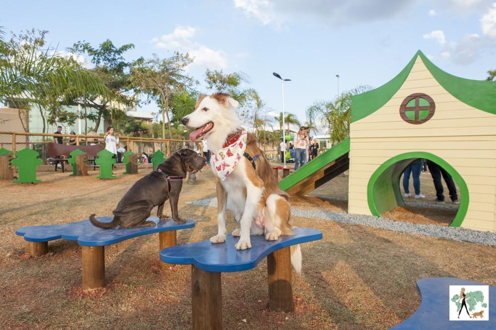 cachorros em parque para cachorros