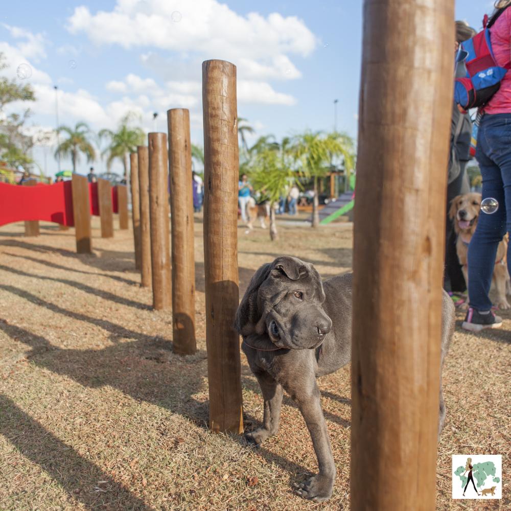 cachorro em parque para cachorro olhando de lado e para baixo