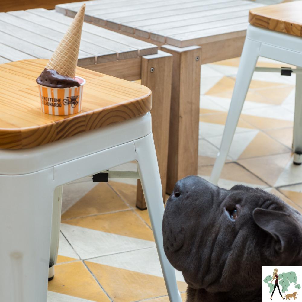 cachorro olhando para casquinha de sorvete
