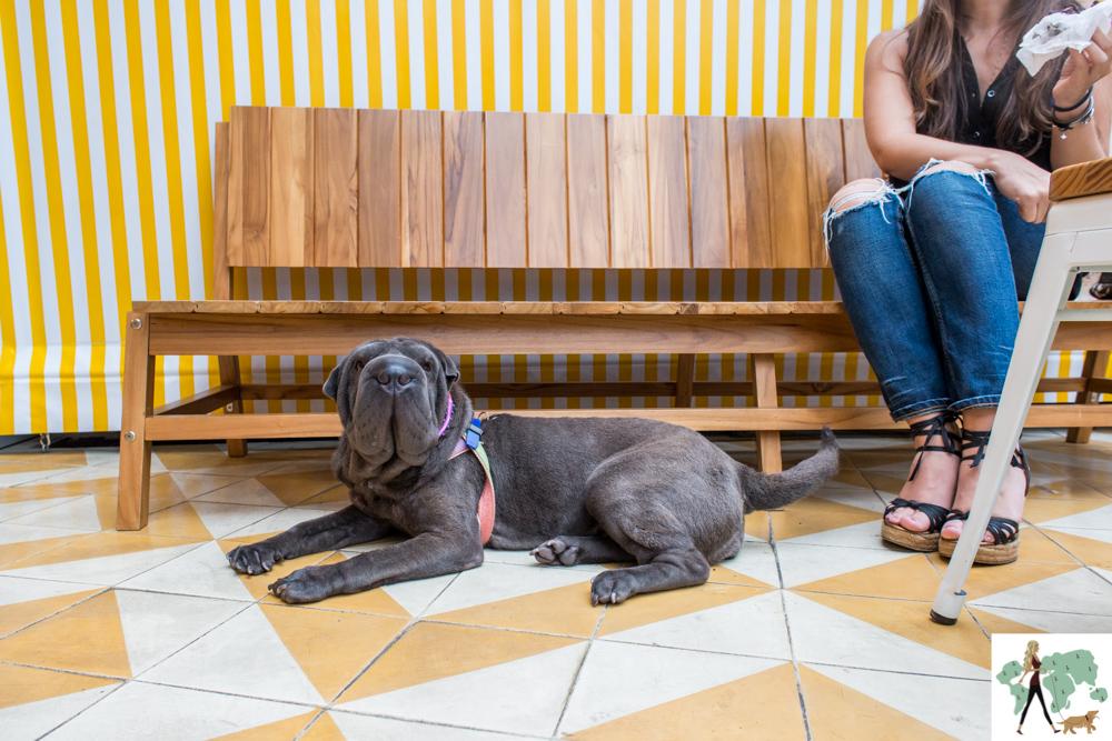 cachorro deitado e pernas de mulher