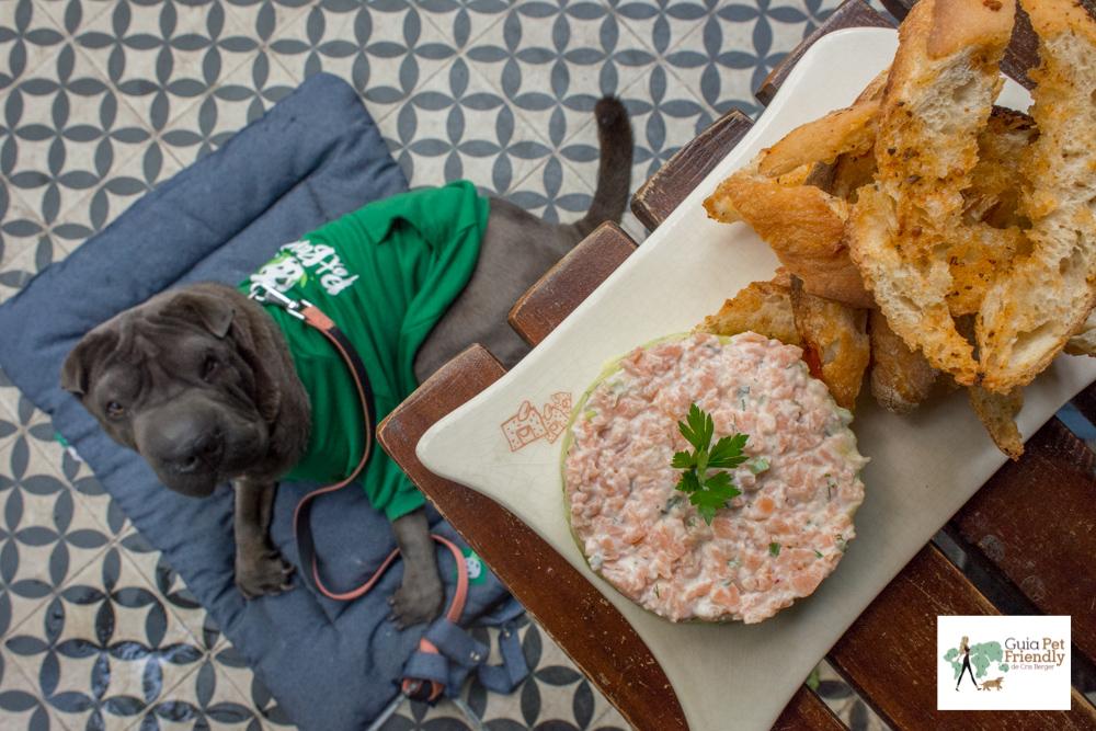 prato com tartar de salmão e cachorro deitado