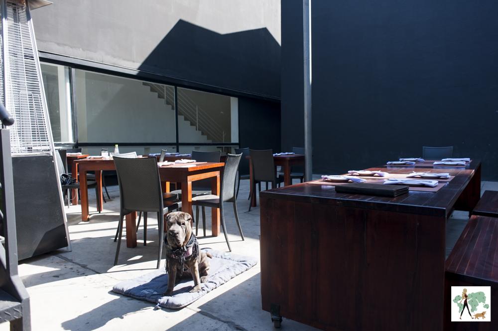 cachorro sentado na varnda do restaurante SAL