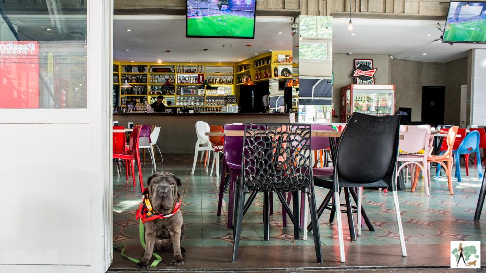 cachorro na porta de bar