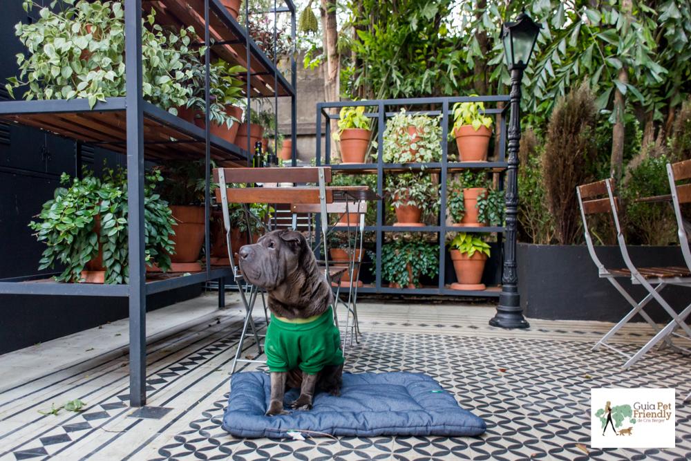 cachorro sentado e prateleiras com plantas
