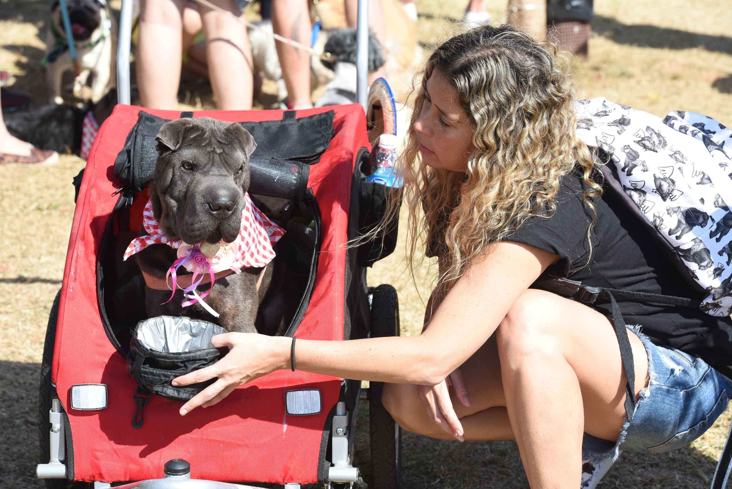 mulher com pote de água e cachorro na cadeirinha