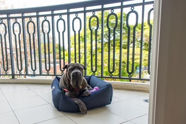 cachorro deitado na almofada na frente da grade