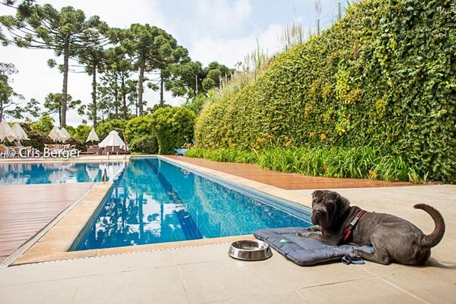 cachorro deitado em almofada do deque da piscina