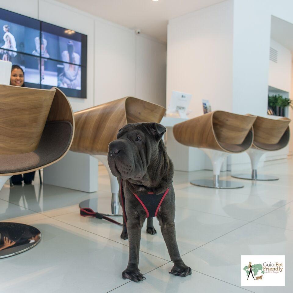 cachorro em pé na recepção de hotel