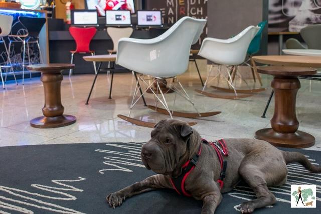 cachorro deitado no salão ao lado de cadeiras