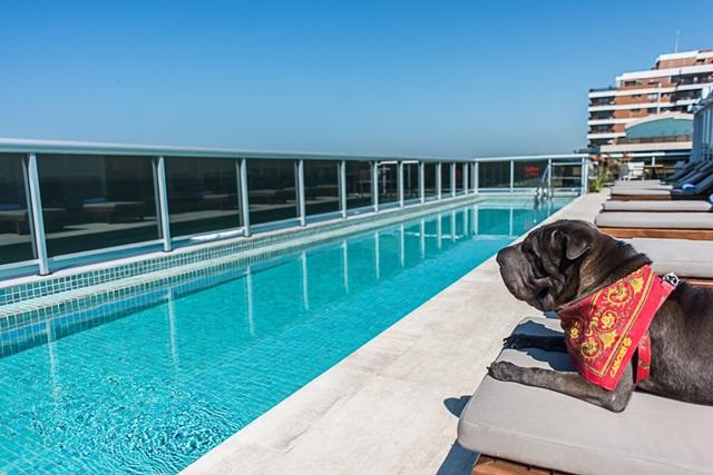 cachorro do deque olhando para a piscina