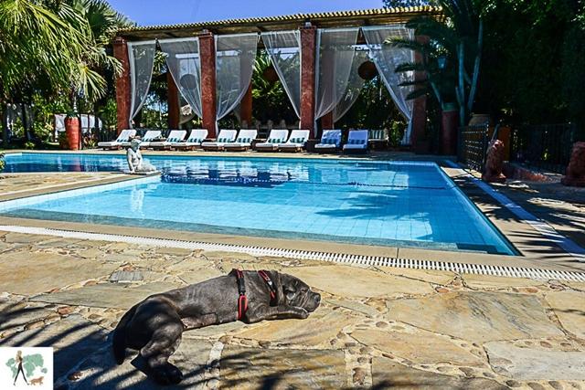 cachorro deitado ao lado da piscina