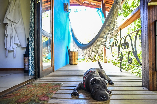 cachorro deitado na varanda de pousada