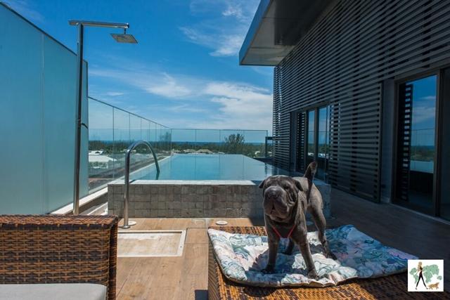cachorro em pé em cima da espreguiçadeira no deque do hotel