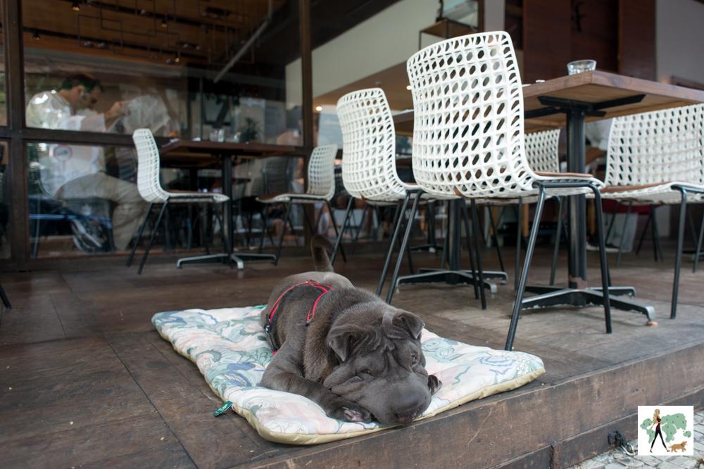 cachorro deitado em cima de almofada na varanda de restaurante