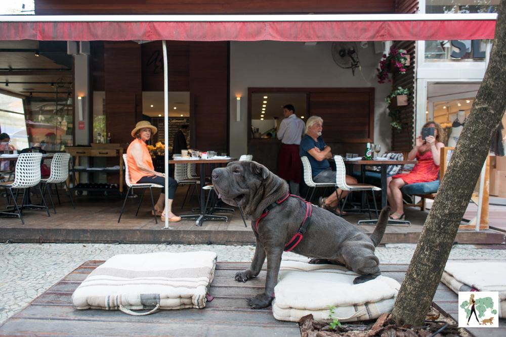 cachorro sentado em banco da calçada na frente de restaurante