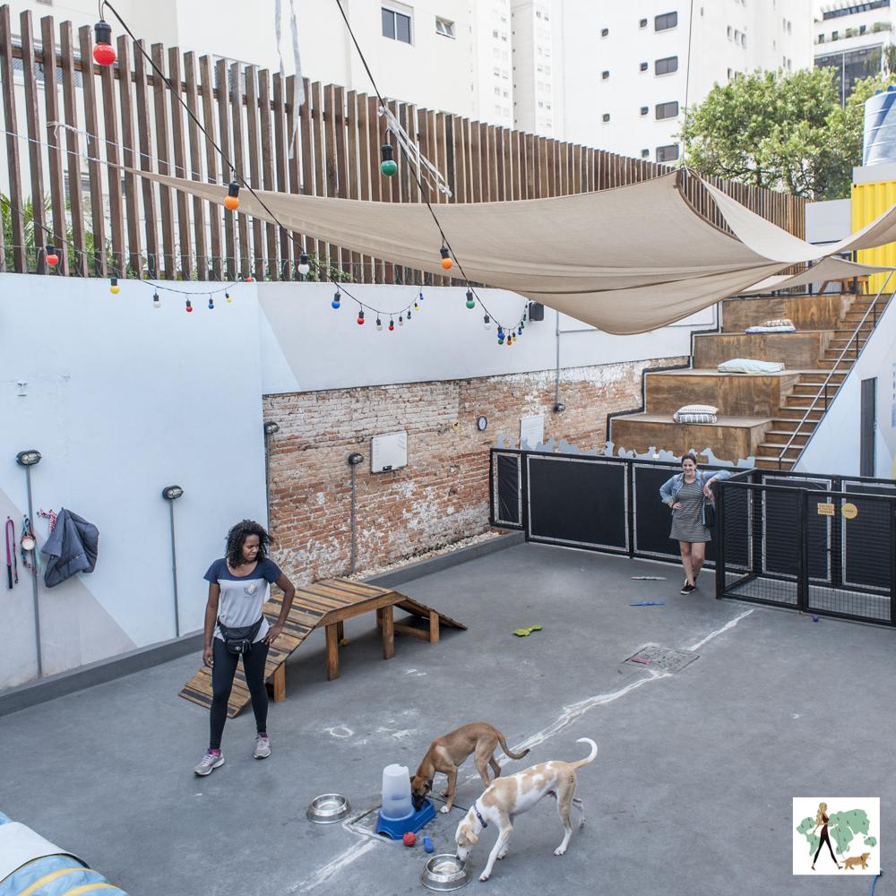 cachorros em área de recreação