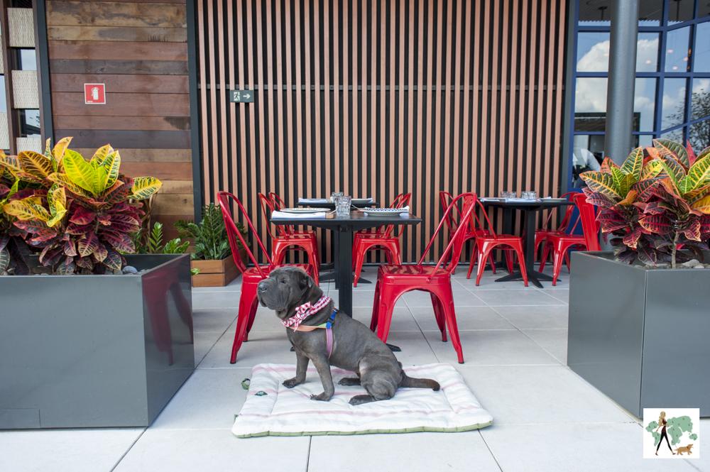 cachorro sentado no colchonete em frente a restaurante