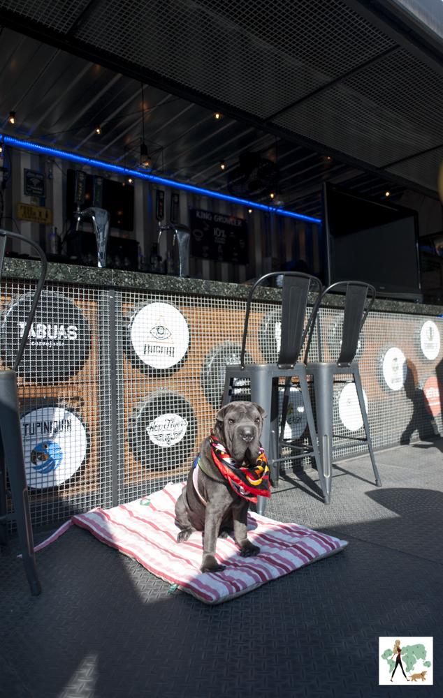 cachorro sentado perto do balcão