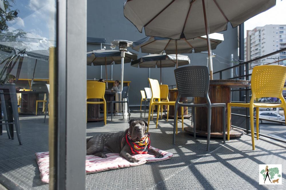 cachorro deitado entre as mesas