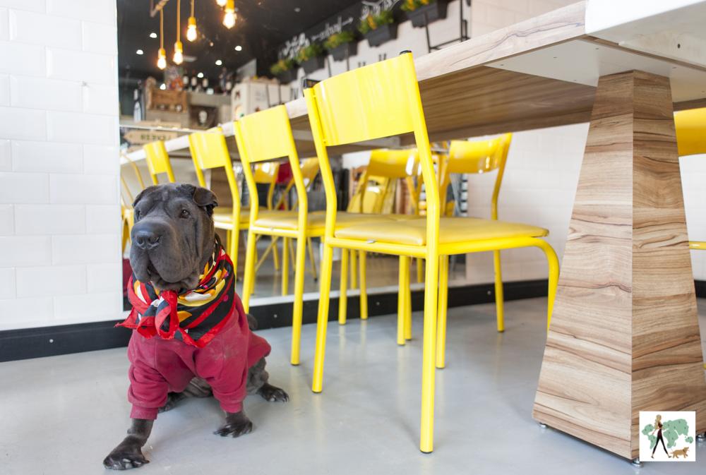 cachorro perto de cadeiras amarelas