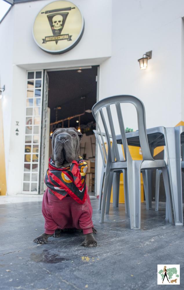 cachorro sentado na frente da pizzaria