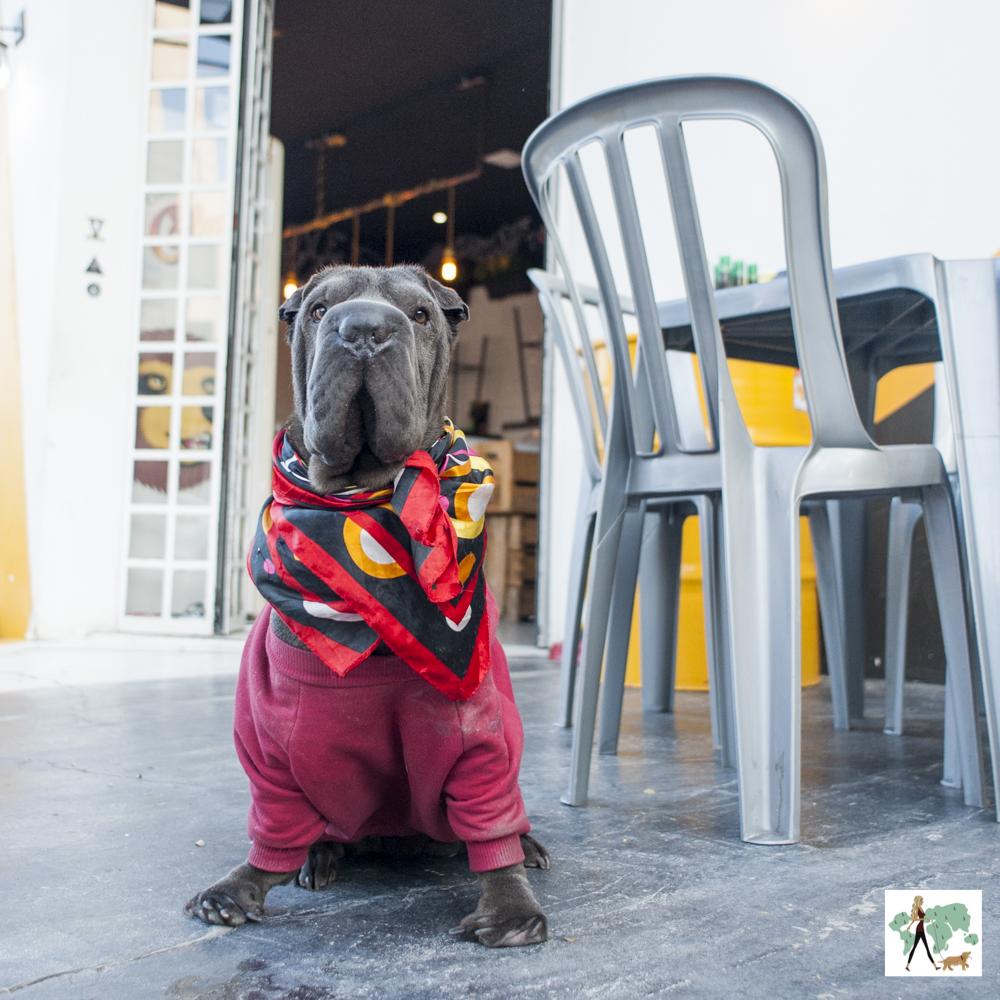 cachorro com lenço sentado