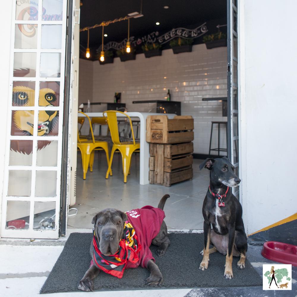 dois cachorros na frente da pizzaria