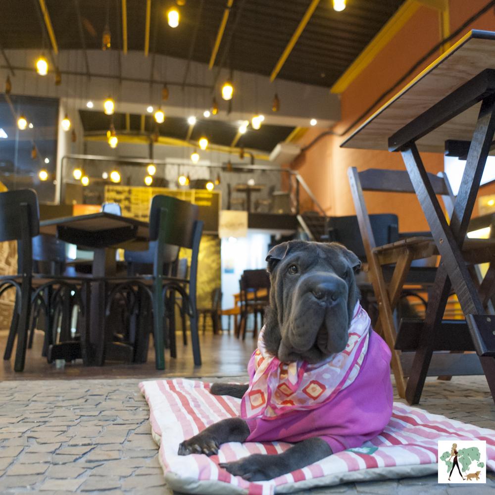 cachorro deitado de bandana rosa