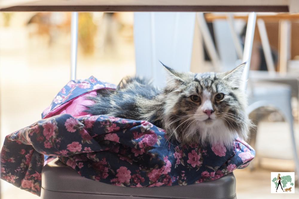 gato sentado em cima de cadeira