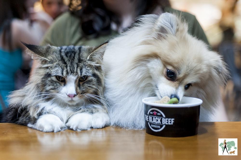 gato e cachorro lambendo sorvete