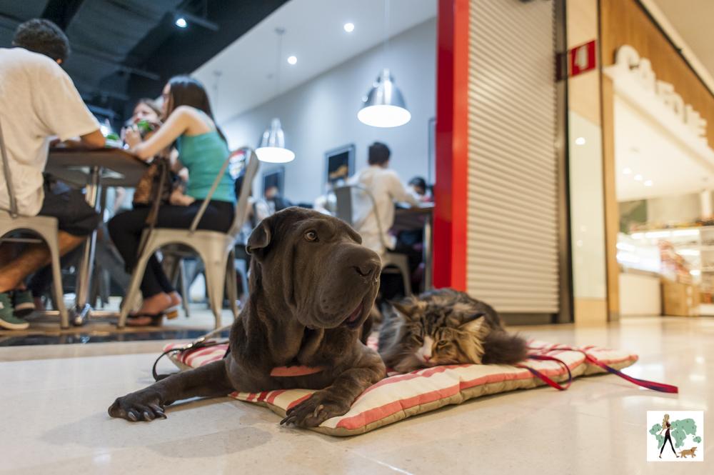 cachorro e gato na frente de hamburgueria