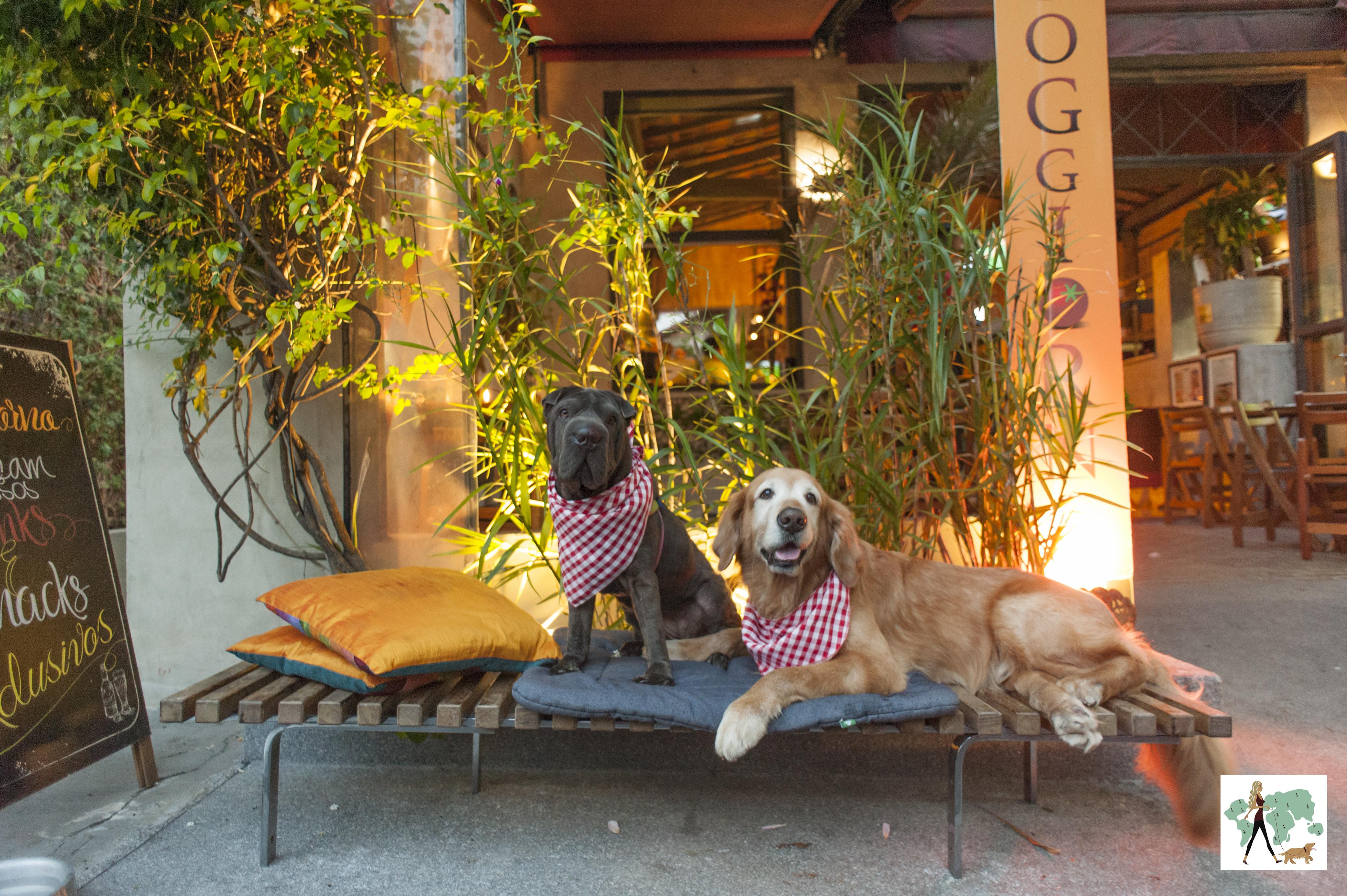 cachorros em cima banco em pizzaria