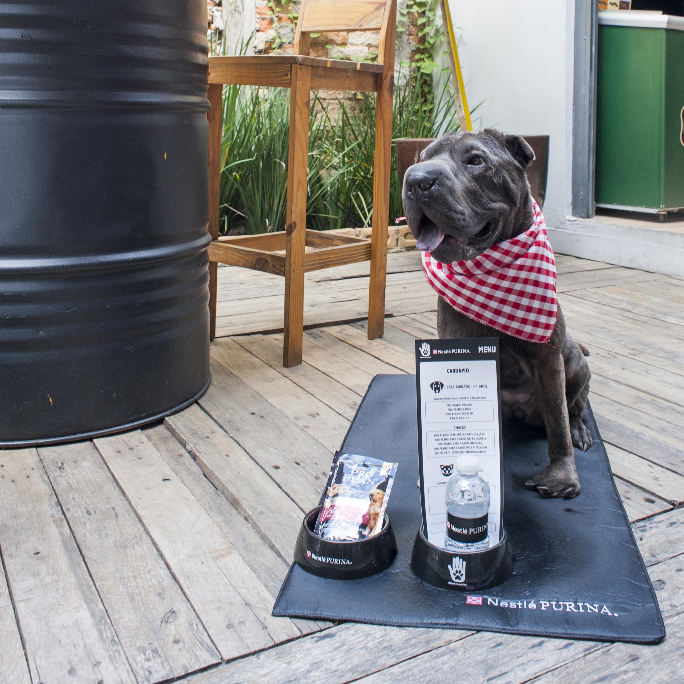 cachorro sentado com comedouro, água e comida