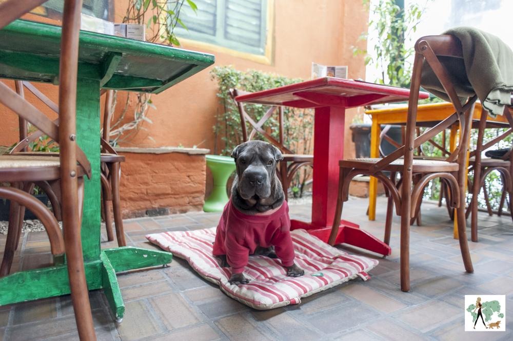 cachorro sentado no colchonete dentro de restaurante
