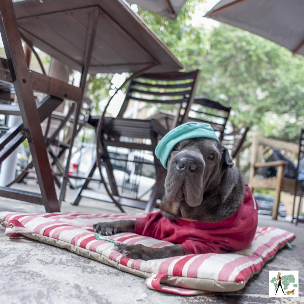 cachorro usando boina em varanda de restaurante