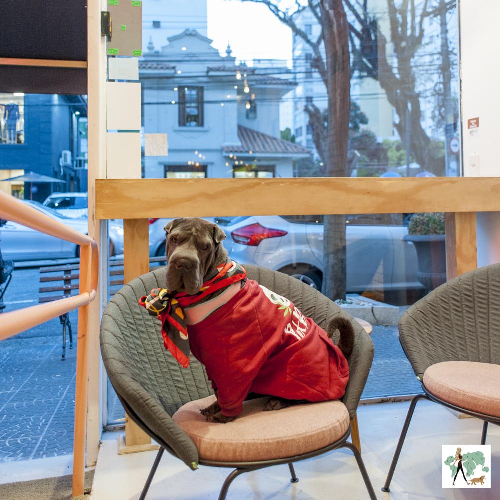 cachorro em cima de cadeira
