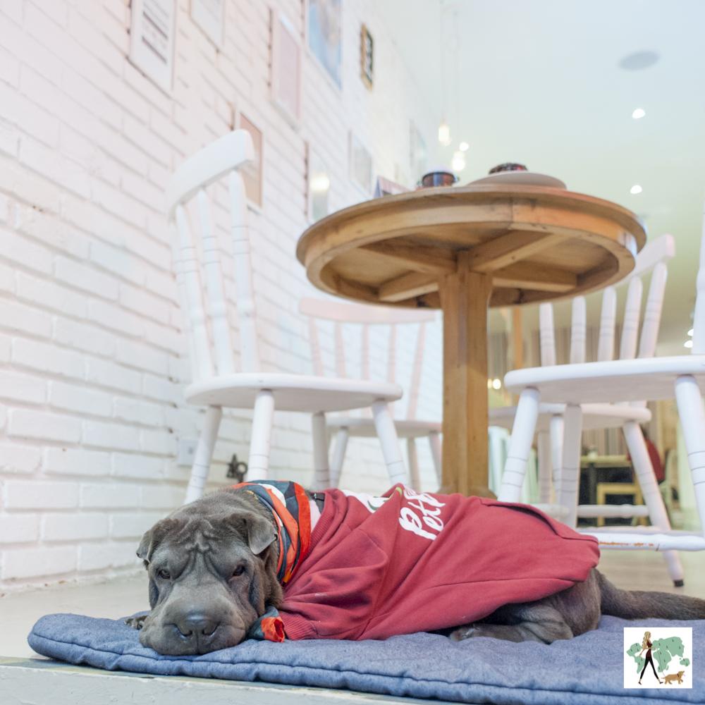 cachorro deitada em cima de almofada ao lado de mesa