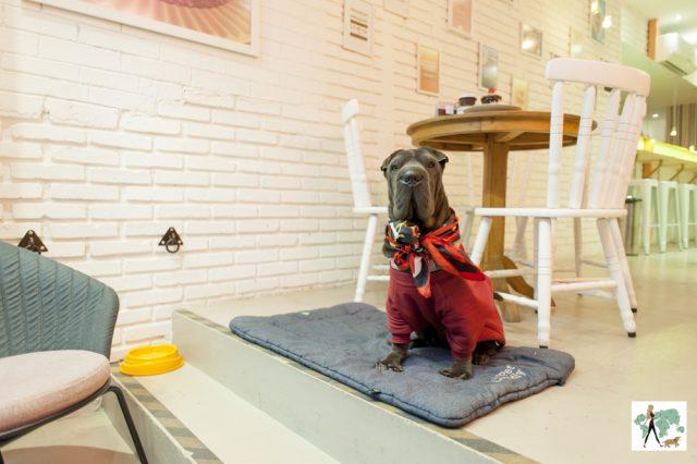 cachorro sentado dentro da loja