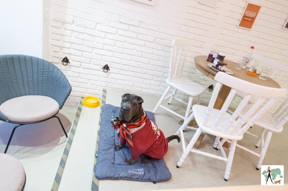 cachorro sentado ao lado de mesa em café