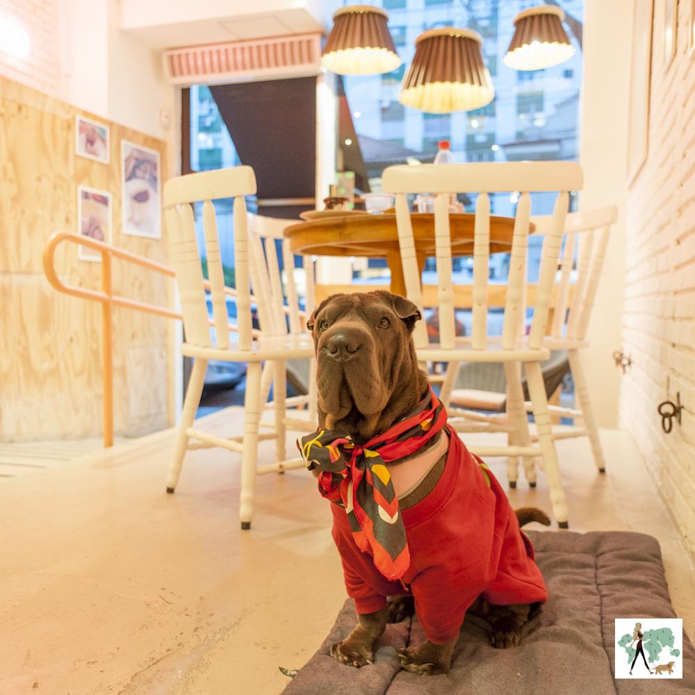 cachorro usando moleton e com lenço no pescoço