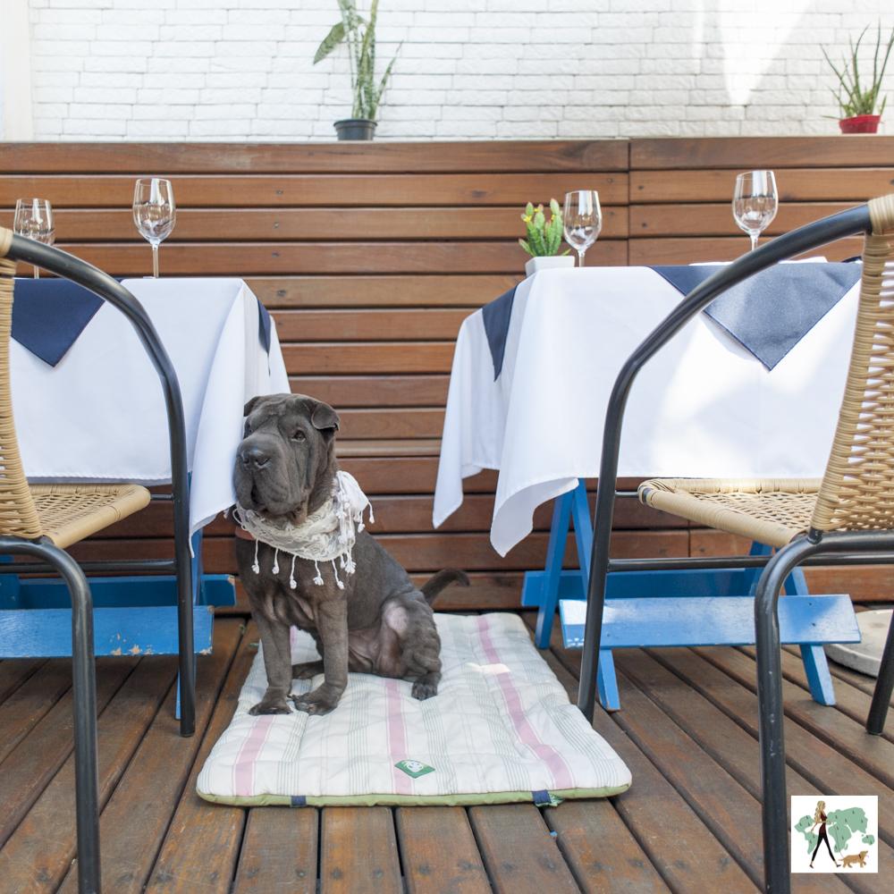 cachorro sentado entre duas mesas