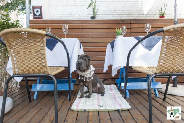 cachorro sentado na varanda entre mesas