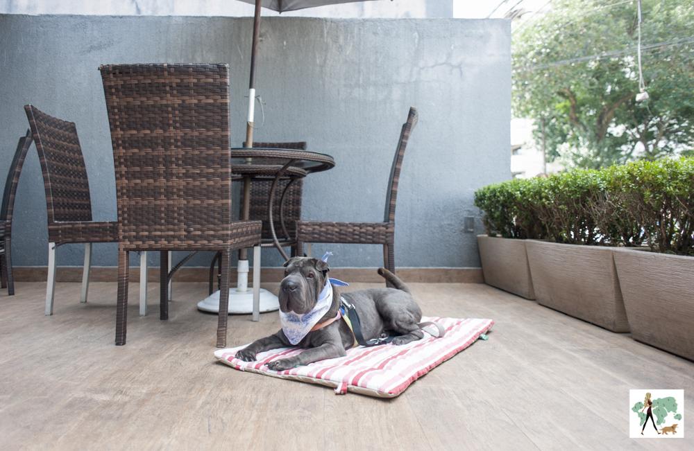 cachorro sentado em cima do tapete