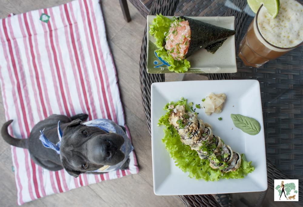 cachorro olhando para temaki e hot roll em restaurante japonês