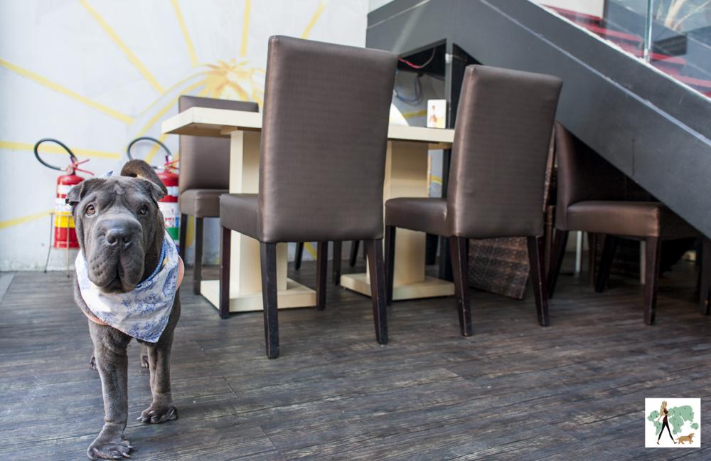 cachorro de pé dentro de restaurante japonês