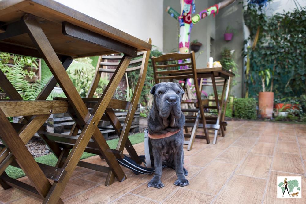 cachorro sentando ao lado se mesa em restaurante