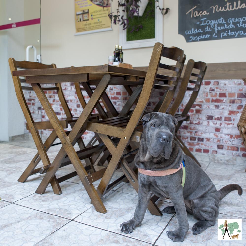 cachorro sentando ao lado de mesa em restaurante