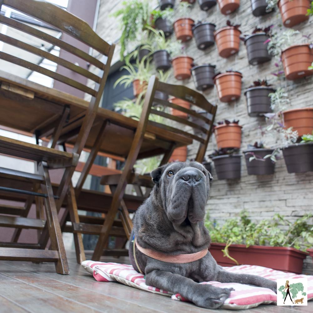 cachorro sentando ao lado se mesa em restaurante com parede com vasinhos pendurados
